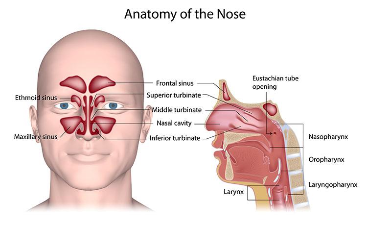 Acupuncture For Sinus Pressure Relief Orlando FL - Harmony ...